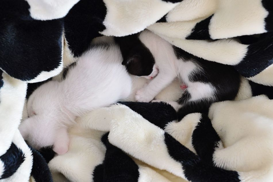 Animal Themes Pets Young Animal Close-up Togetherness Kittens My Cats Black And White Domestic Animals Four Legs And A Tail Kitty Cats Power Napping EyeEm Nature Lover Nougat and Toto