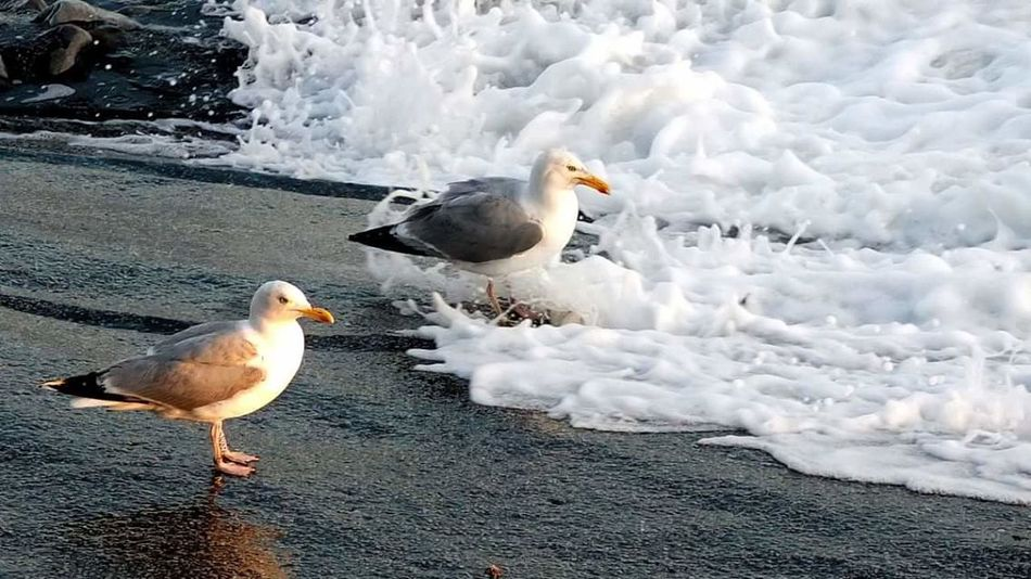 Seabirds Seaside Waves Gulls Shite Hawks