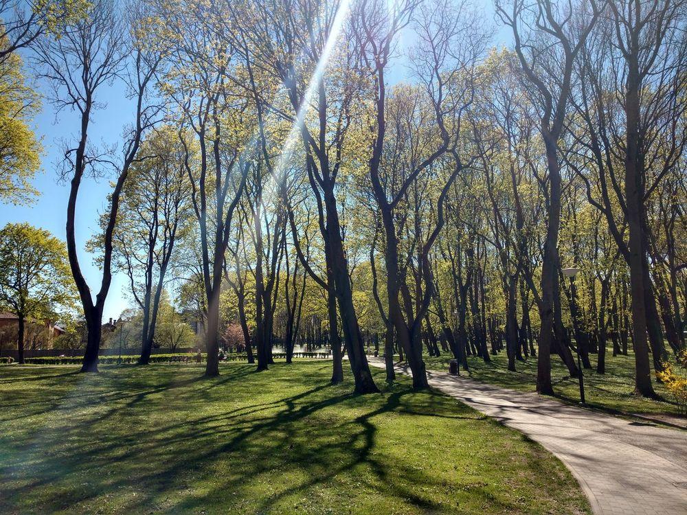 Kalamaja park Kalamaja Tallinn Nature Tree Growth Beauty In Nature Outdoors Day Sunlight Tranquility Scenics First Eyeem Photo