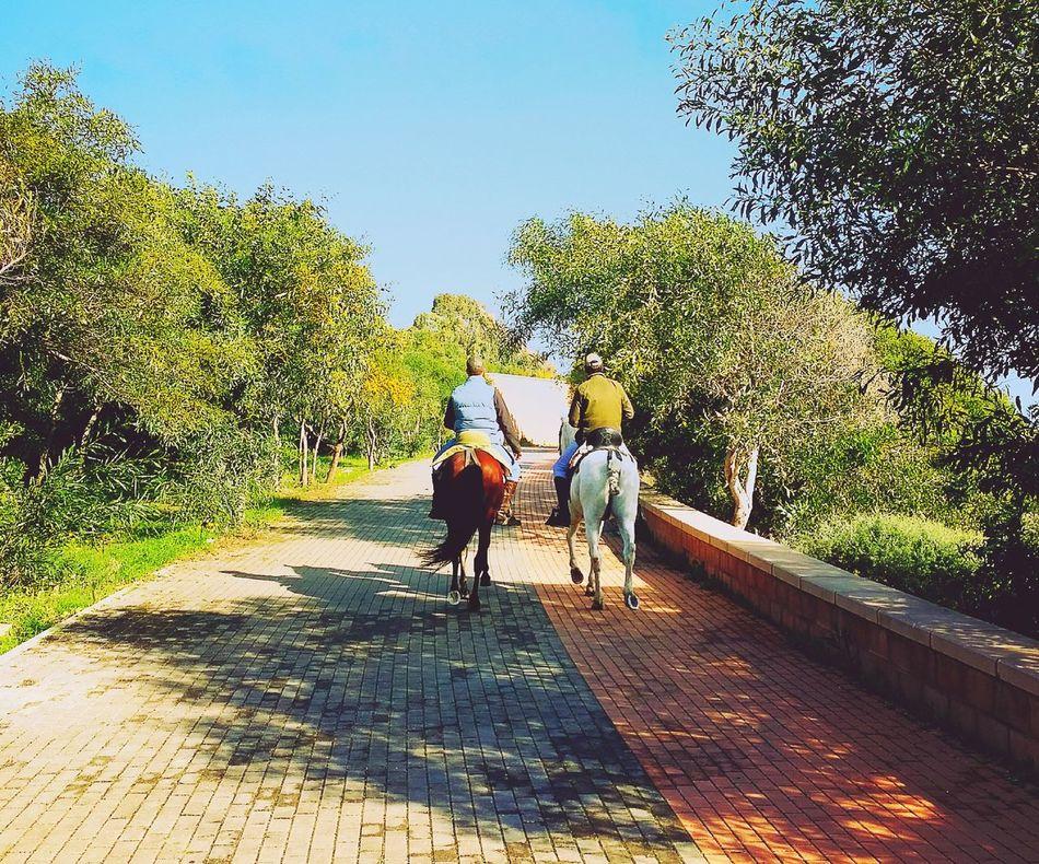 Horse Paseo A Caballo Caballo