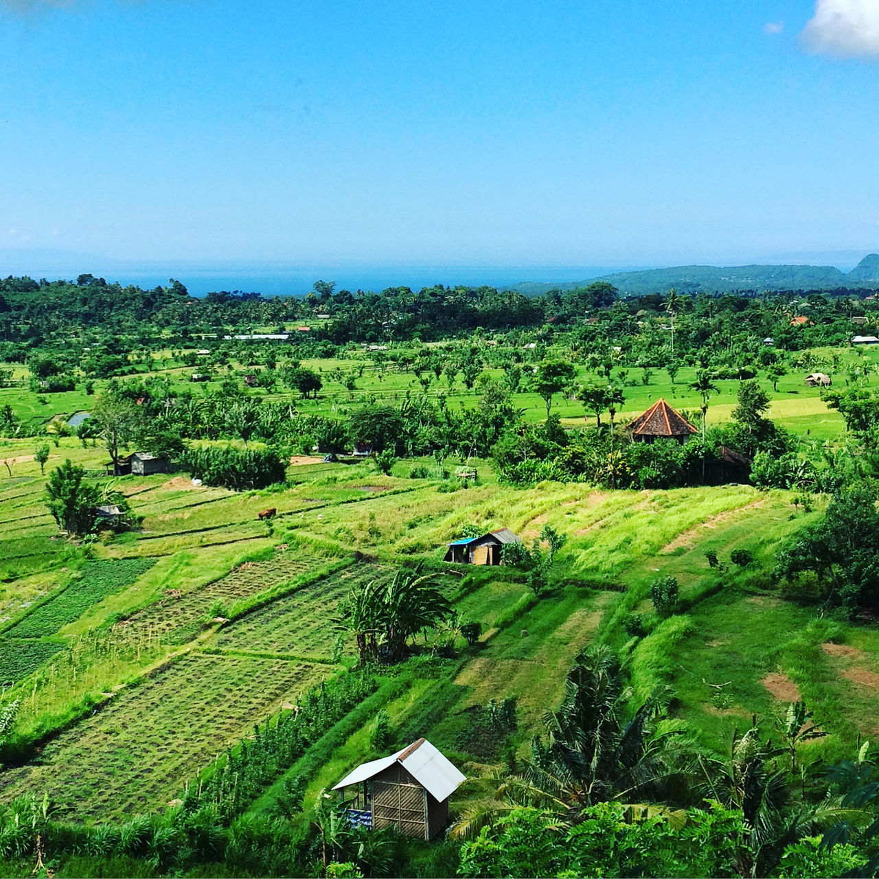 Bali landscape Bali Bali, Indonesia Beauty In Nature Day Field Grass Green Color Idyllic Landscape Nature No People Outdoors Rice Field Rural Scene Viewpoint