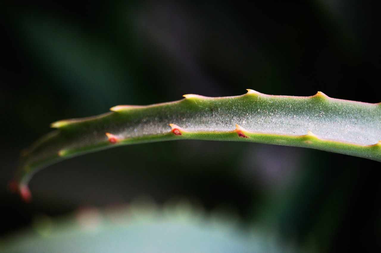 Aloe Vera Close-up Day Fat Plant Focus On Foreground Green Color Leaf March 2017 Milano No People On My Balcony Outdoors