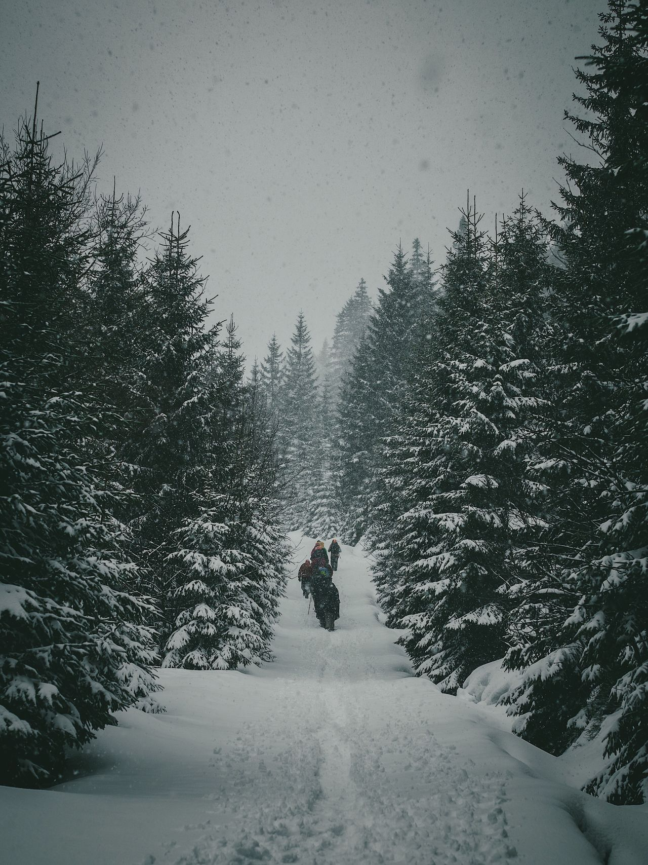Winter Tree Snow Cold Temperature Weather Leisure Activity Nature Beauty In Nature One Person Full Length Forest Real People Outdoors Day Men Landscape Only Men Warm Clothing Snowing One Man Only