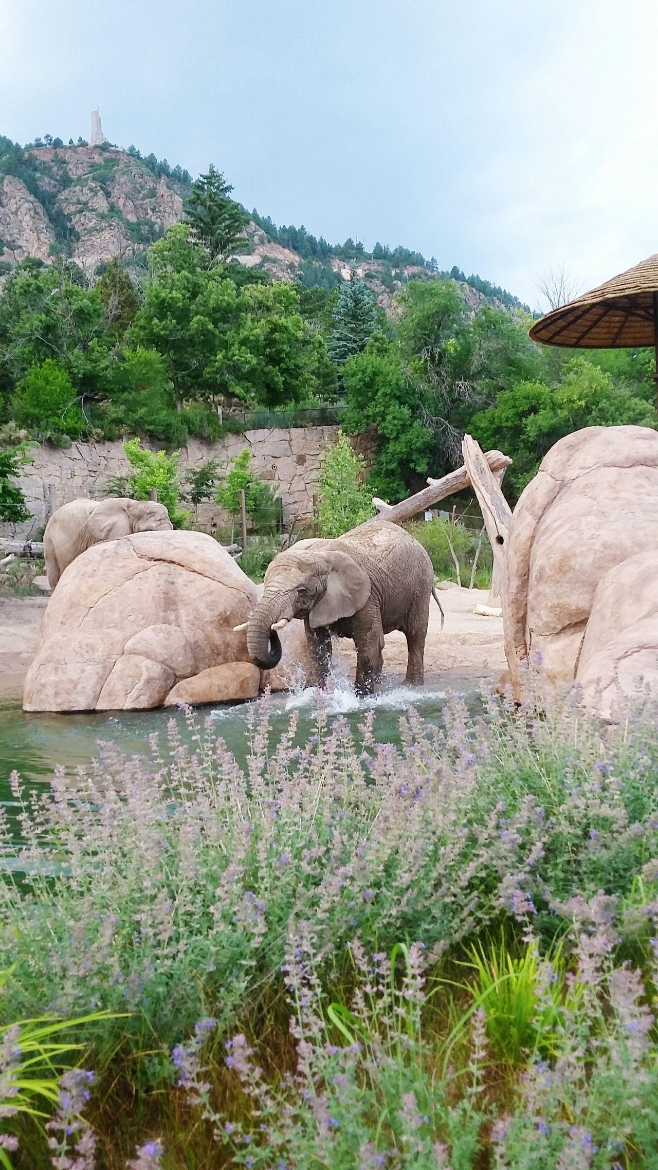 Beautiful stock photos of elefant,  Animal Wildlife,  Animals In Captivity,  Day,  Elephant