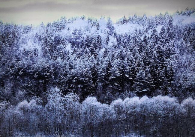 Wintertime Winter Trees Winter Forest Exceptional Photographs Cold Temperature Nature Photography EyeEm Gallery EyeEm Nature Lover January Beautiful Nature From My Doorstep Winter Snowy Forest Nature