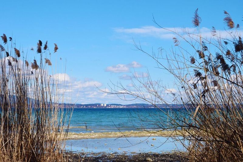 Water Nature Sea Tranquil Scene Tranquility Beauty In Nature Day Scenics Outdoors Marram Grass Sky Beach No People Grass Blue Growth Horizon Over Water Bodenseeufer Bodenseebilder Wintertime