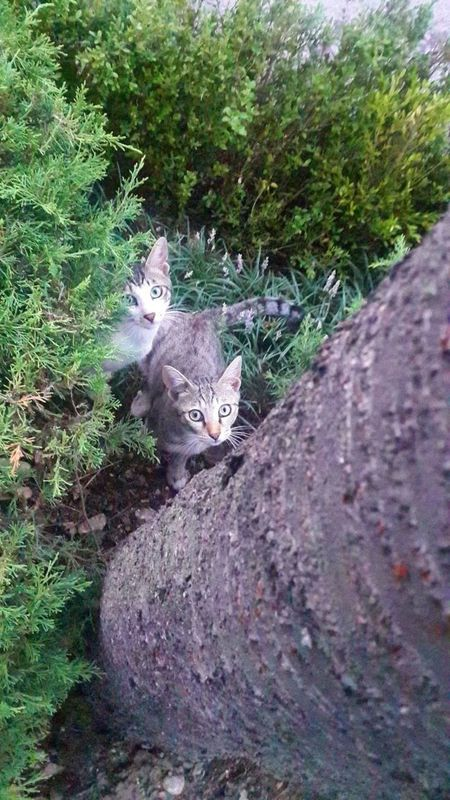 Seoukchon Lake Cats Animal Photography Very Cute Cat Wild Cats Little Cats Alley Cat A Feral Cat Cat Lovers Nature Photography Seoul_korea