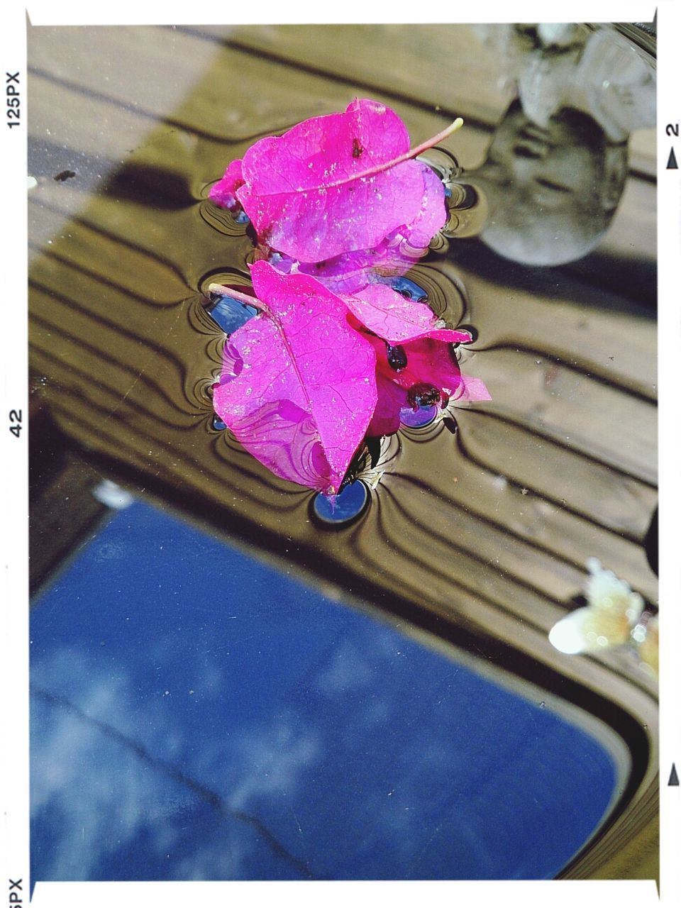 flower, petal, nature, water, beauty in nature, fragility, no people, freshness, wet, close-up, flower head, pink color, outdoors, growth, day, plant