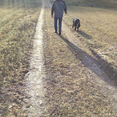 Walking Walking With Dog Old Man Dog Sunny Day Beautiful Day Walk Stroll Take The Air Go Walkies Walkies Doggy Walk A Dog Weekend Walk No Filter