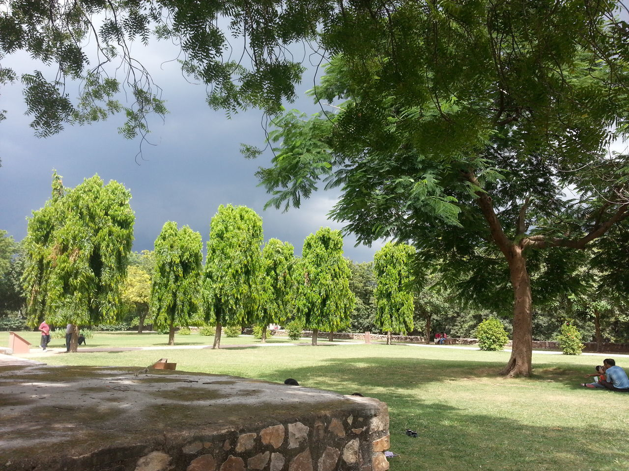 tree, growth, nature, green color, grass, outdoors, day, sky, no people, golf course