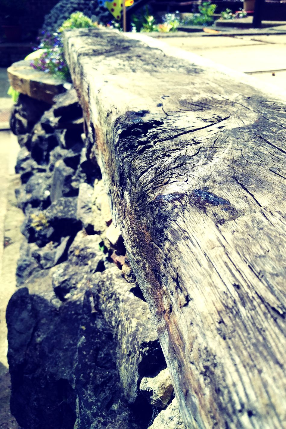 Wood I? Day No People Outdoors Close-up Nature Wood - Material Wood Sleeper Wood Sleeper Textures Textured  Weathered Weathered Wood Garden Flowers Focus On Foreground Knotted Wood