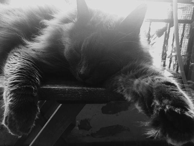 Zufolo Gatto😸 Felinos Felino Gatto Cat Lovers Cats Cat Cat♡ Zampette