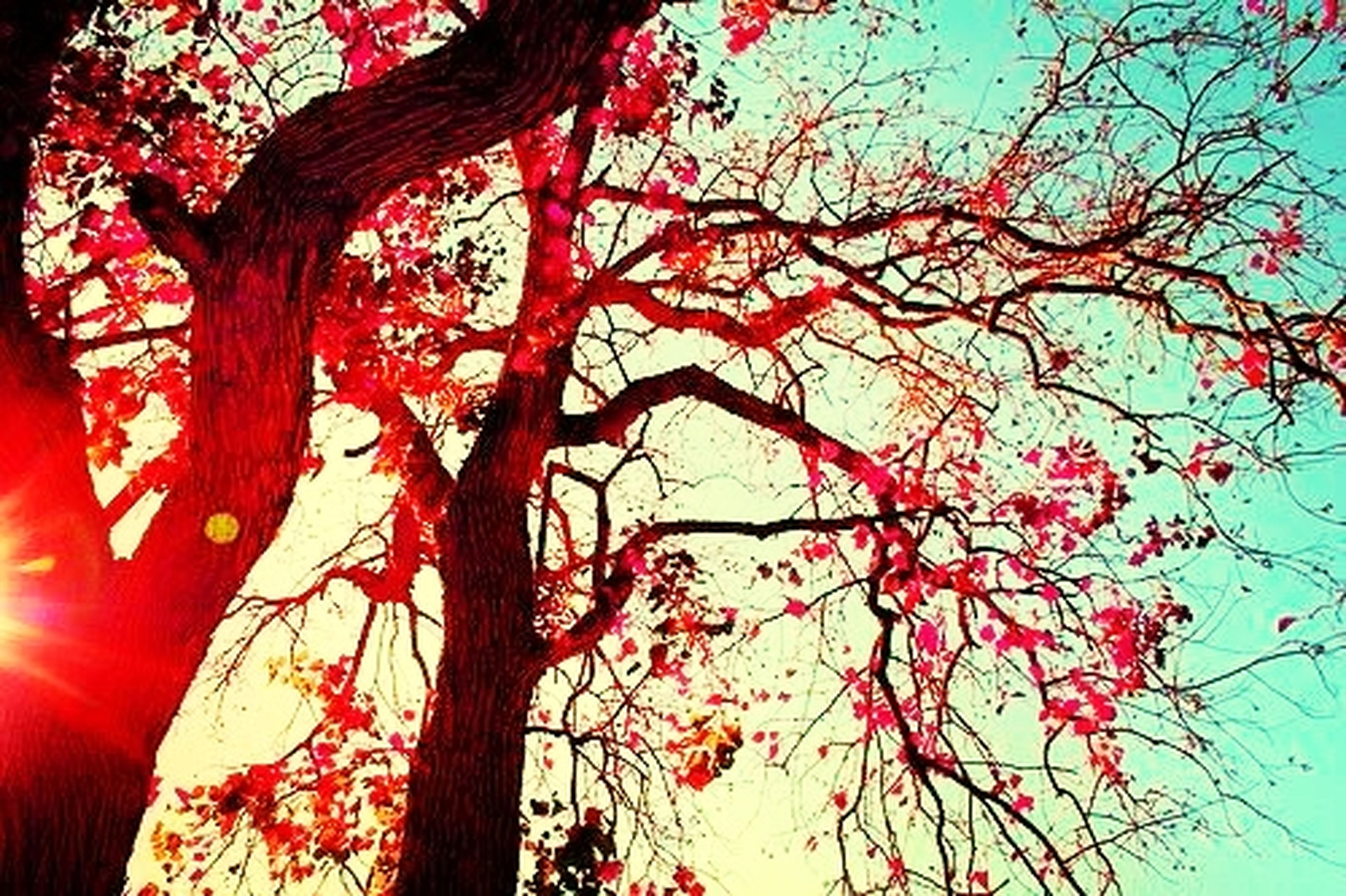 tree, low angle view, branch, sky, growth, silhouette, nature, bare tree, beauty in nature, clear sky, red, tree trunk, tranquility, orange color, sunlight, outdoors, no people, day, autumn, dusk
