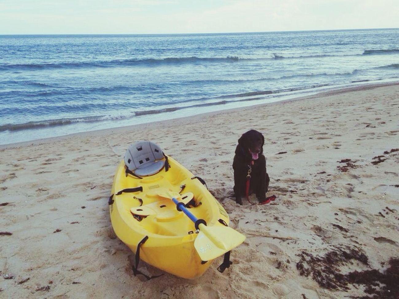 Boysie and a boat Ted Travels Beach Life Mydog OBX14