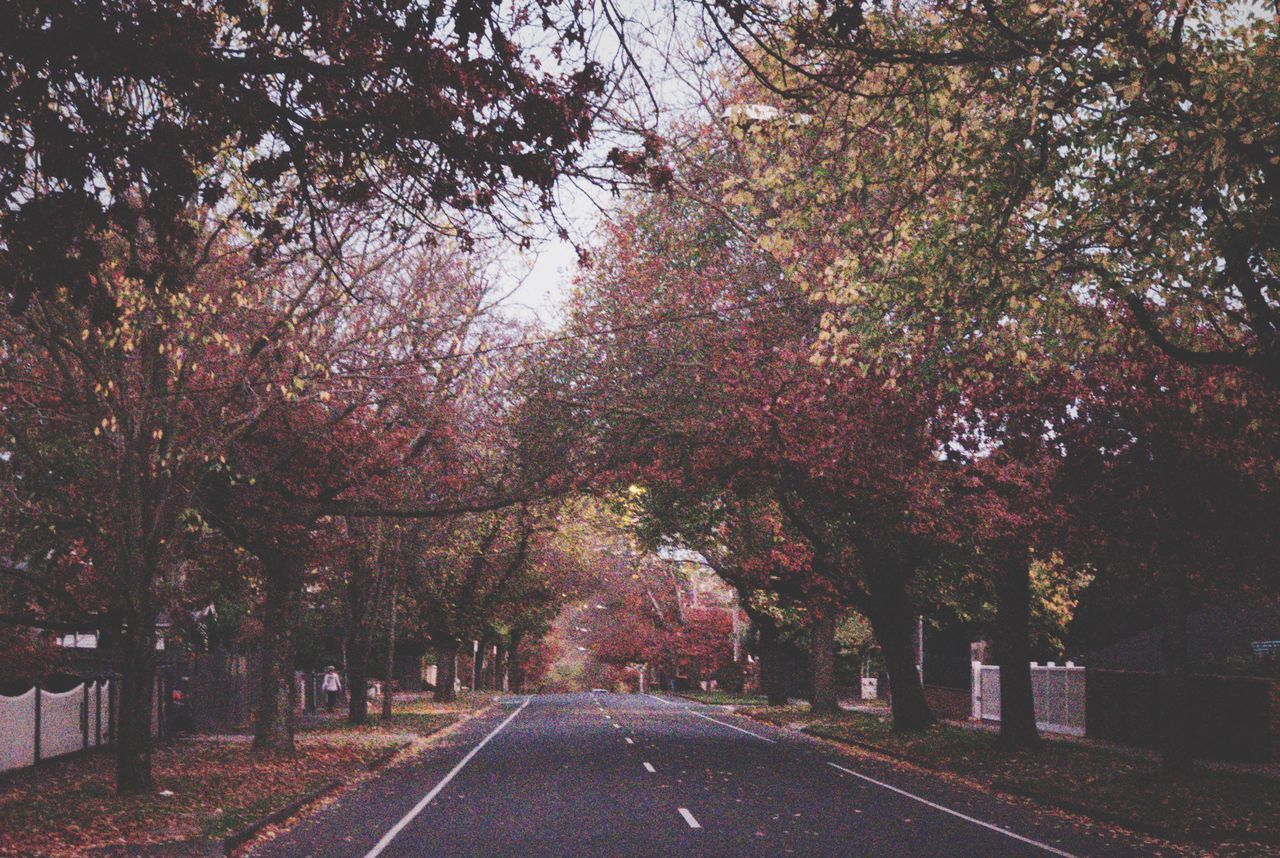 Autumn Colours Tree Road The Way Forward Autumn Outdoors Nature Change Beauty In Nature Transportation No People Tranquility Scenics Day Growth Branch Sky