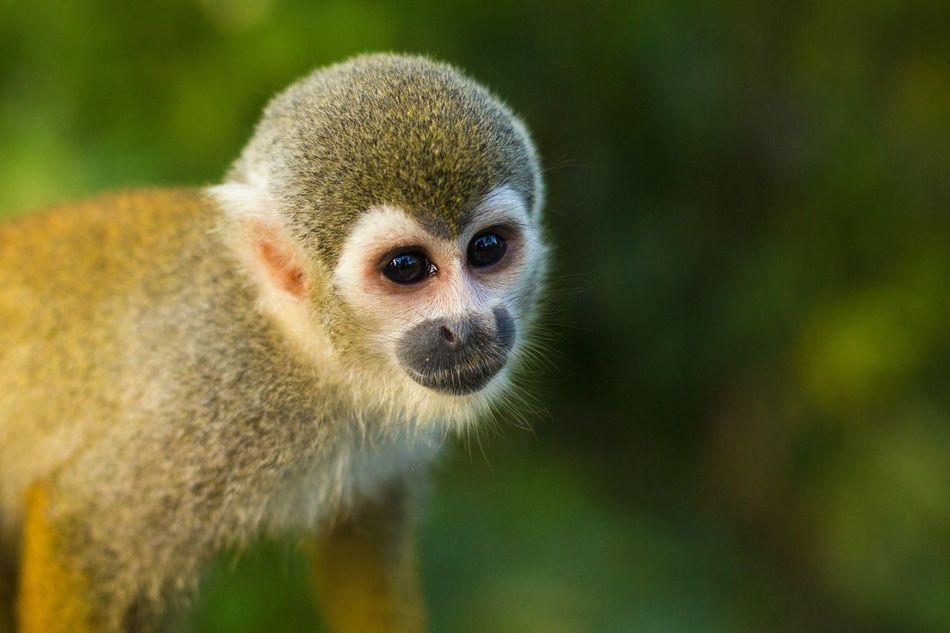 Beautiful stock photos of wildlife, Copy Space, animal Hair, animal Head, animal Themes