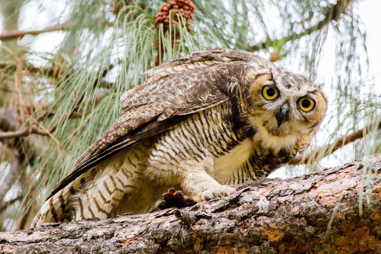 Portrait Of Alert Owl Perching On Tree