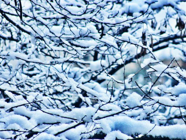 شالم را ... دور گردنم ... سه دور میپیچم ... زمستان ... فصل اعدام بغض هاست مرضیه_همایونی زمستان  درخت برفی مشهد ایران Iran Mashhad Winter Snow ❄ Nature Photography Lanscape EyeEm Samsung GalaxyS5 Beautiful Sky Photography Nature Follow Cute Sight Like