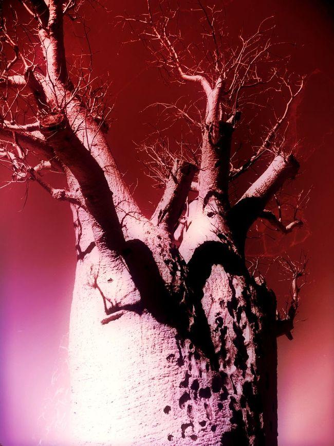 The Adventure Handbook Boab Tree Tree Monochrome IPhoneography