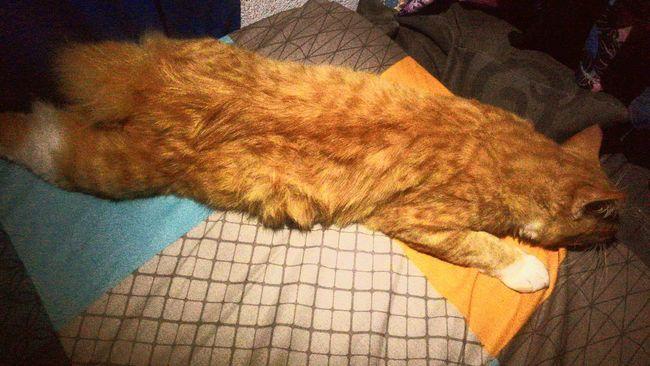 The way it sleep 😴.. I Love My Cat