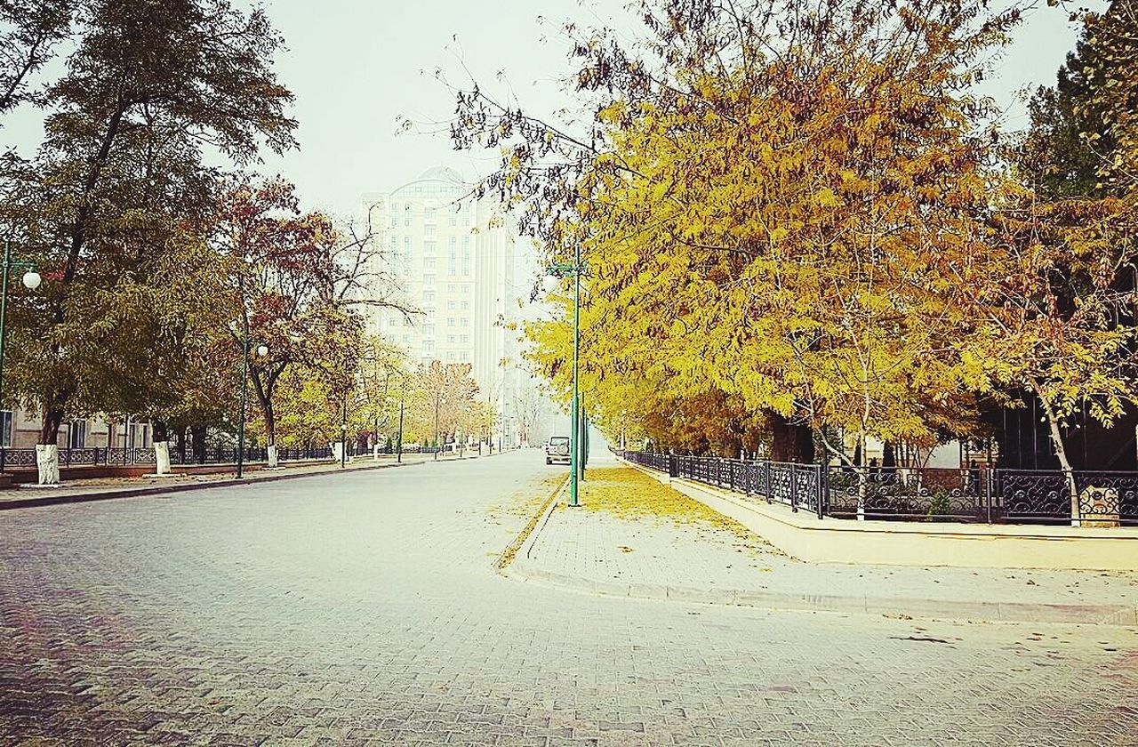 Grozny Chechnya Tree Transportation Road Street The Way Forward Tranquility Tranquil Scene Growth Day Branch Nature Diminishing Perspective Scenics Solitude Outdoors Beauty In Nature Non-urban Scene Treelined Sky Long