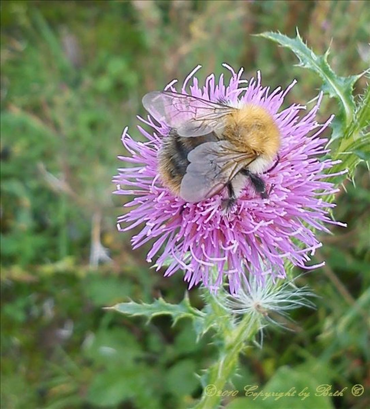 Babybiene🌾 Biene Blumenpracht🌺🍃 Blume-biene🌾 Check This Out Hello World Hi! Mobileflowers