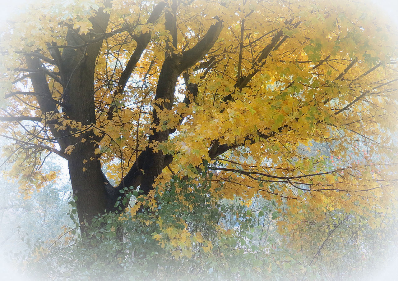 nature, tree, growth, autumn, branch, no people, beauty in nature, day, outdoors, close-up, freshness, sky