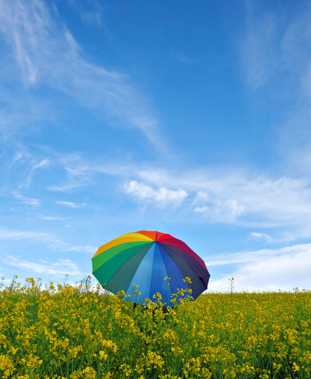 Umbrella Against Field Of Yellow Flowers