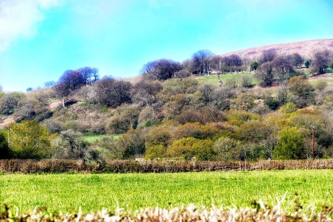 Part of the hillside near Cwmbran Check This Out Taking Photos Relaxing Enjoying Life Nature_collection EyeEm Nature Lover Nature Point Of View Sunny Day Hillside Grass Trees Eyeemphotography Wales Best Of EyeEm Rural Scene Naturelovers Nature Photography Across The Fields