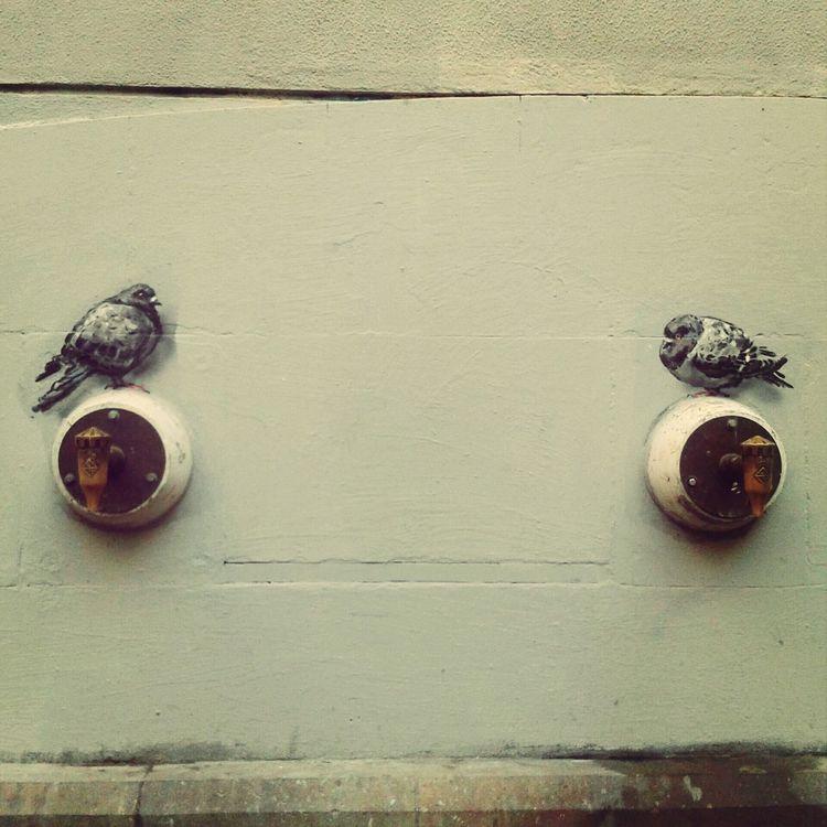 Street Art Walking Around Barcelona Taking Photos Barcelona, Spain Discover Your City Pidgeons Barri El Born El Born