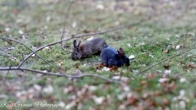 Taking Photos Check This Out Nature Photography Bunnies