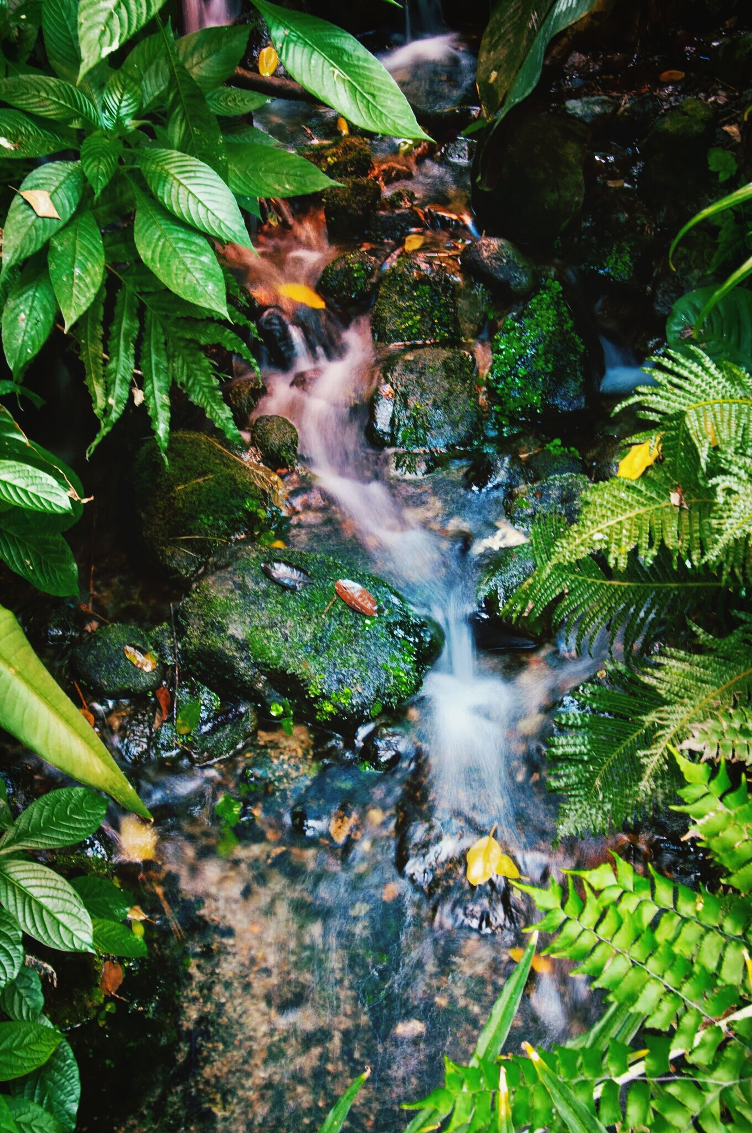 leaf, growth, green color, plant, nature, beauty in nature, forest, water, tree, tranquility, close-up, outdoors, sunlight, scenics, day, no people, leaves, fern, lush foliage, moss