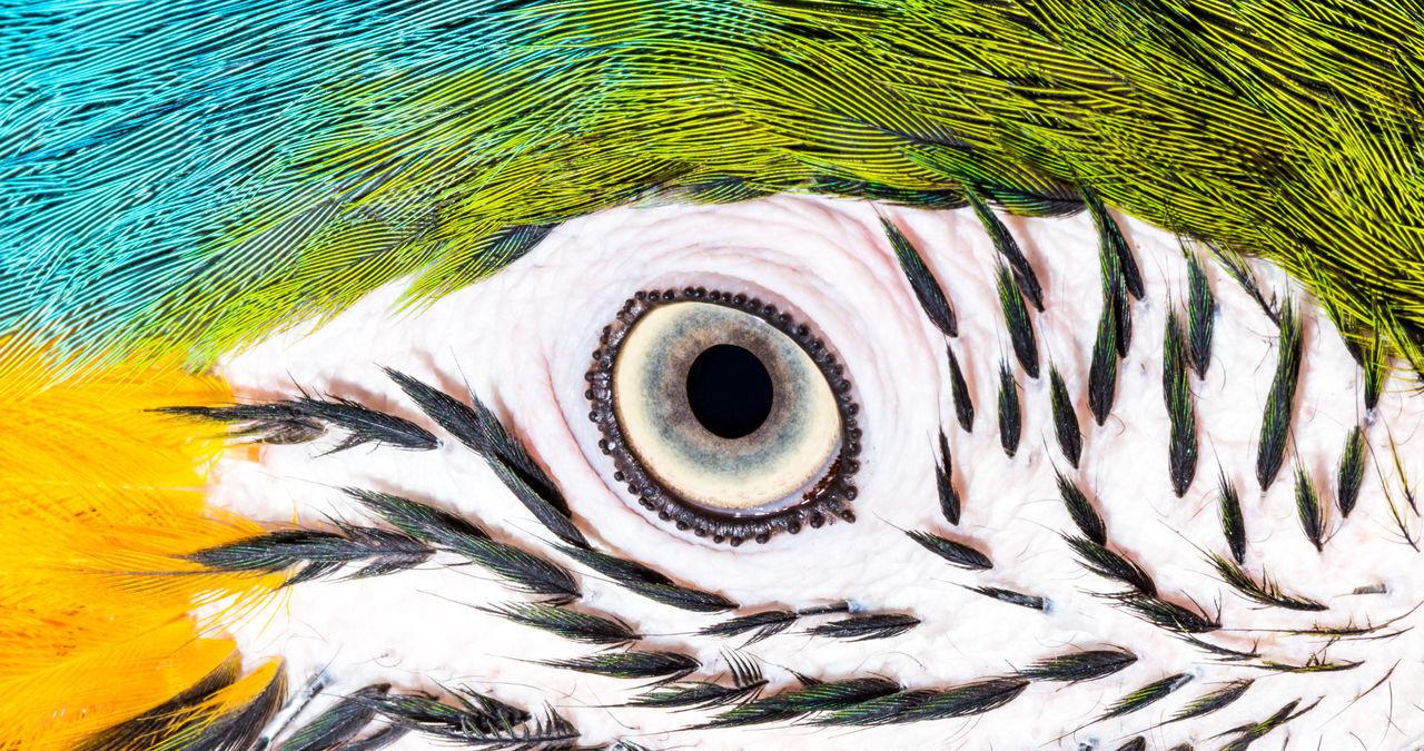 Beautiful stock photos of pfau, Animal Eye, Animal Head, Animal Themes, Backgrounds