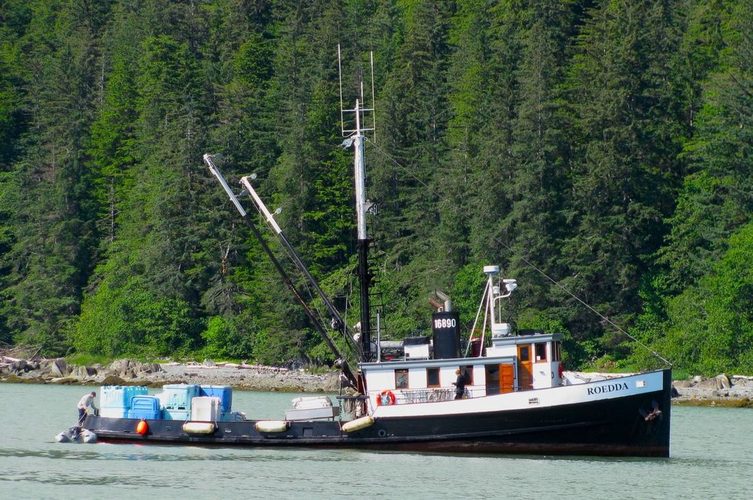Roedda Classic Boats Commercial Fishing Fish Tender Fishing Boat Old Boat Scenic Scenics Wooden Boat WrangellNarrows