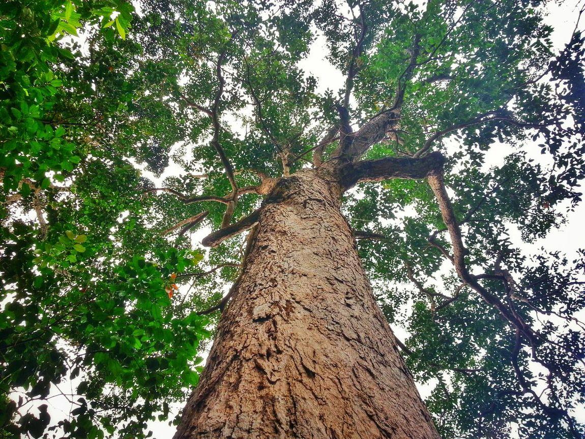 Taking Photos Hugging Tree Forest Park Enjoying Life