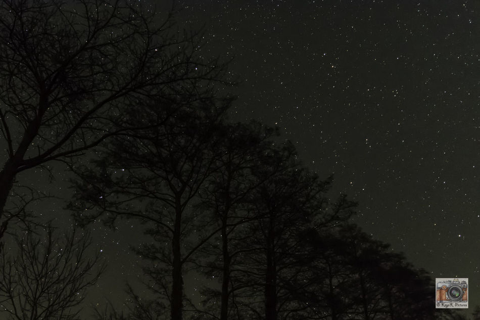 Astronomy Bare Tree Beauty In Nature Branch Galaxy Low Angle View Nature Night Nightwatch Nightwatching Nikon Nikon D5500 Nikonphotographer Nikonphotography No People Outdoors Scenics Silhouette Sky Space Star - Space Star Field Stars Tree