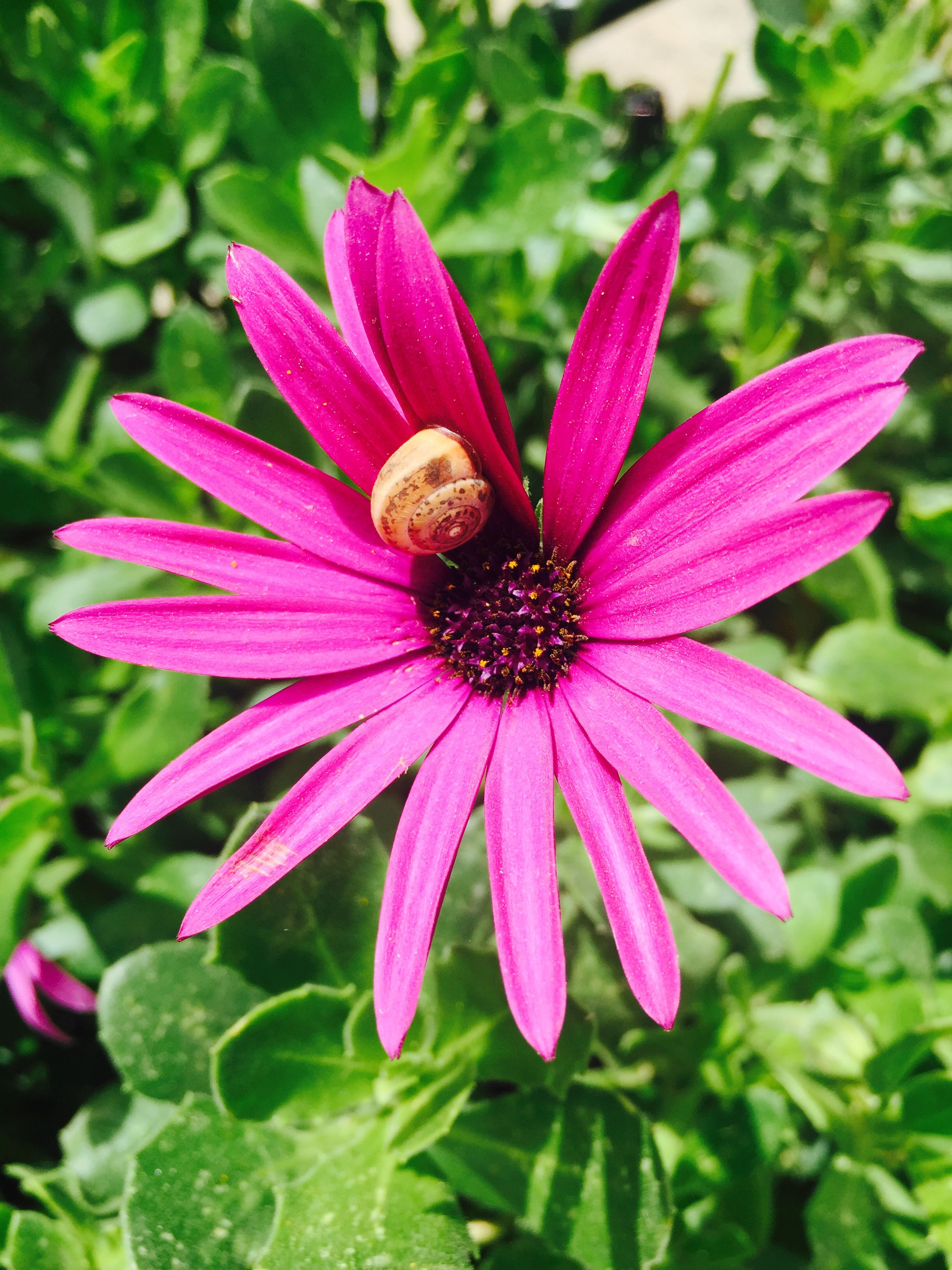 flower, petal, freshness, flower head, fragility, close-up, growth, single flower, focus on foreground, beauty in nature, blooming, red, plant, pollen, nature, pink color, high angle view, in bloom, drop, wet