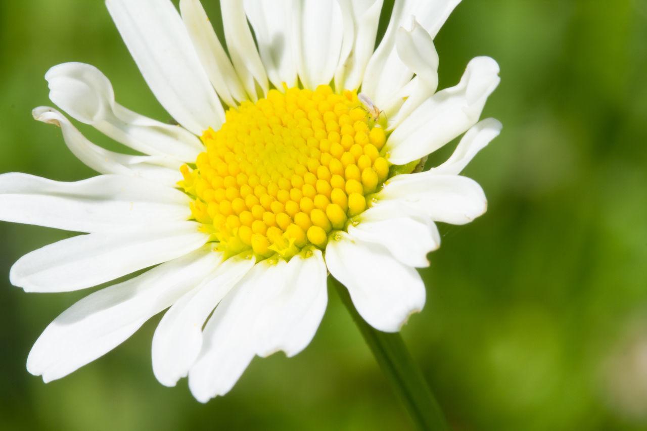 Bad Endbach Summer Flower