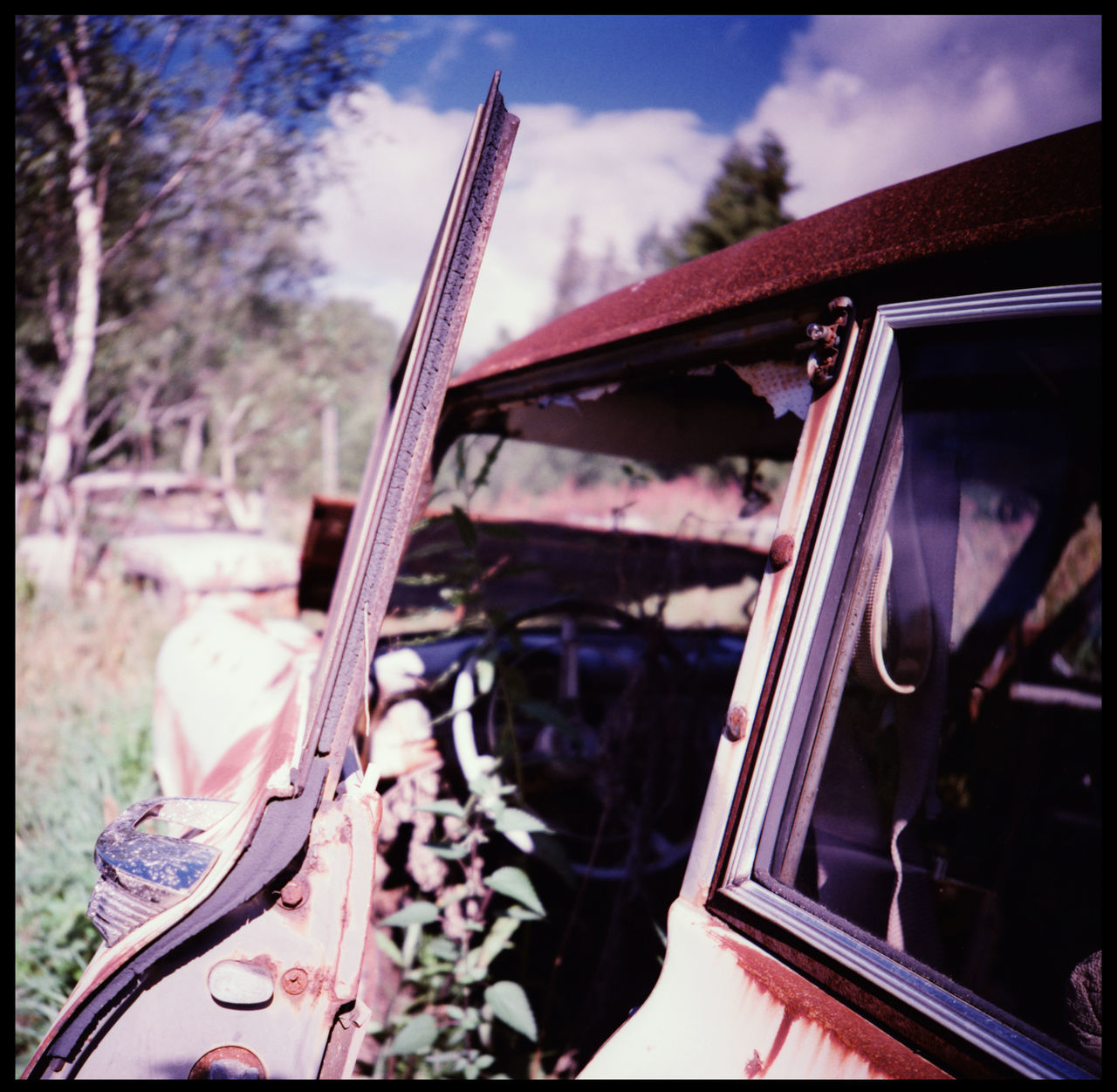 The beauty of decay in the abandonded car cemetery of Båstnäs Abandonded American Cars Apocalypse Art Båstnäs Båstnäs Car Cemetery Båstnäs Töcksfors Car Cemetery Forrest Lomography Metal And Rust Metal In The Forrest No People Powerful Nature Rust And Cars Scandinavia Sweden Sweden Forrest Sweden Nature Travel Trees In Cars Trip Vintage Car Vintage Cars Xpro