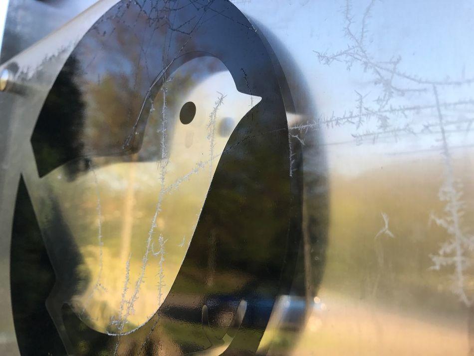 Der frühe Vogel 🐤 Vogel Fink Spiegelung Eiskristalle