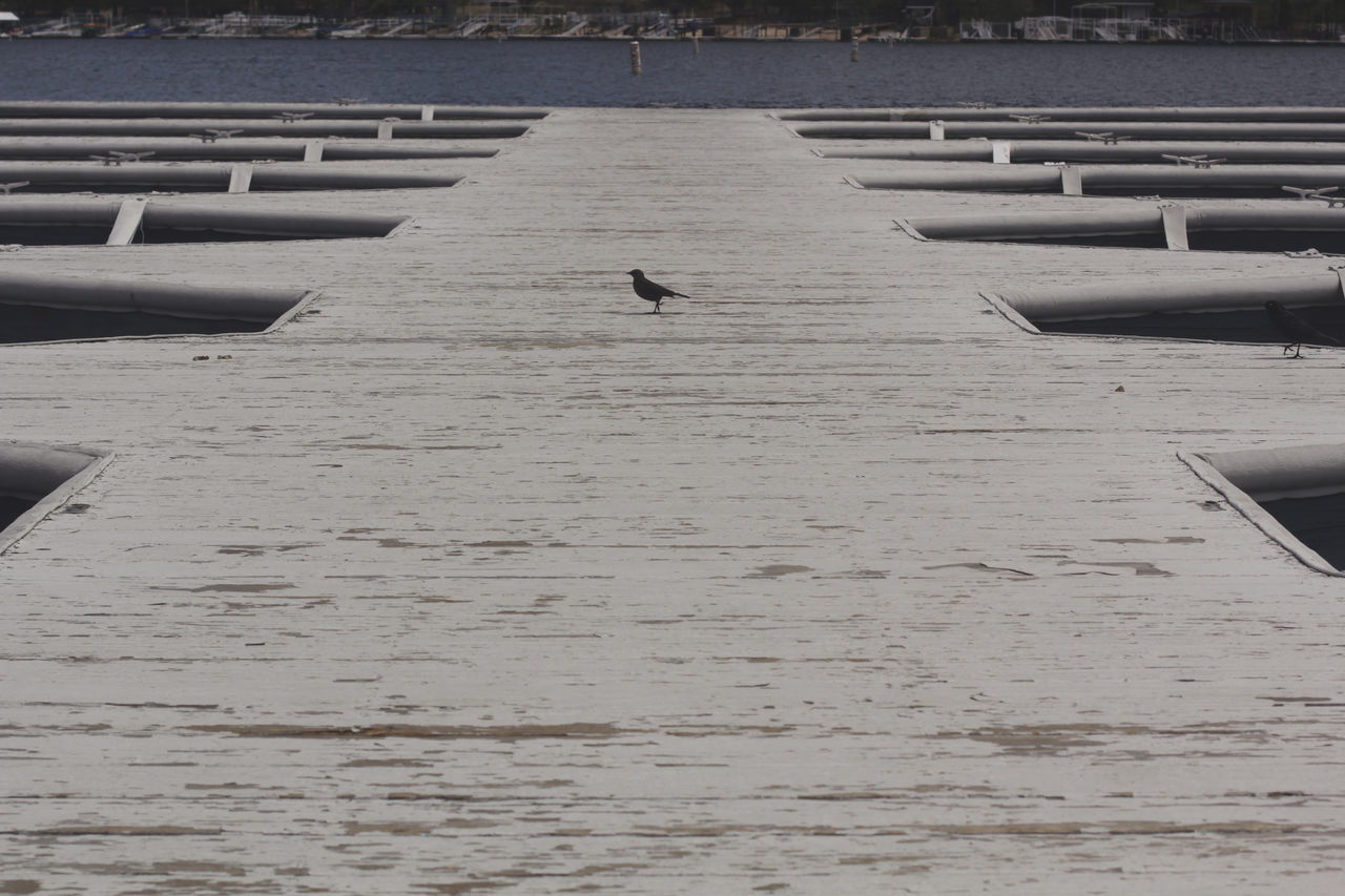 Bird on a dock. Animal Themes Animal Wildlife Animals In The Wild Architecture Beach Bird Built Structure Day Flying Lake Lake Arrowhead Nature No People One Animal Outdoors Water