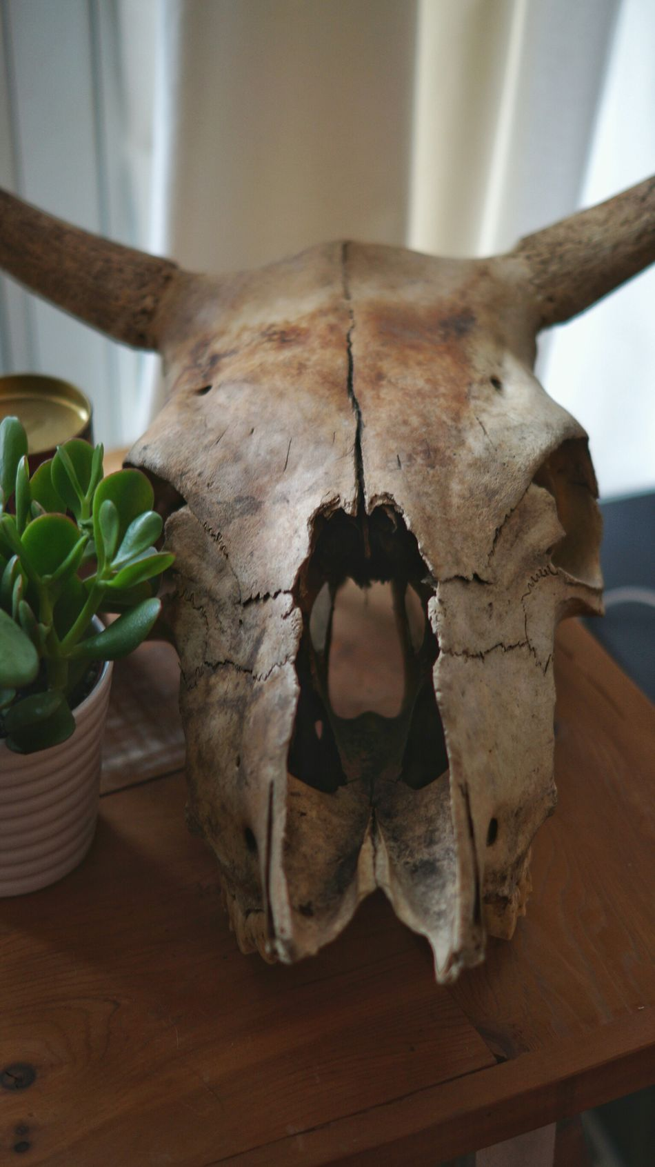 Indoors  No People Close-up Plant Table Freshness Nature Day Decorative Staging Skull Woodsy Indoor Plants Living Room House And Garden Green DIY