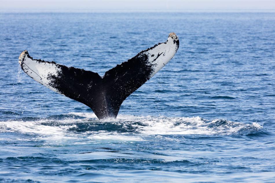 Beautiful stock photos of wildlife, Animal Themes, Animal Wildlife, Animals In The Wild, Beauty In Nature