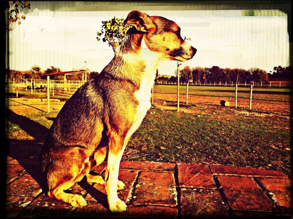 A Dogs Life SPAIN Sundown ??