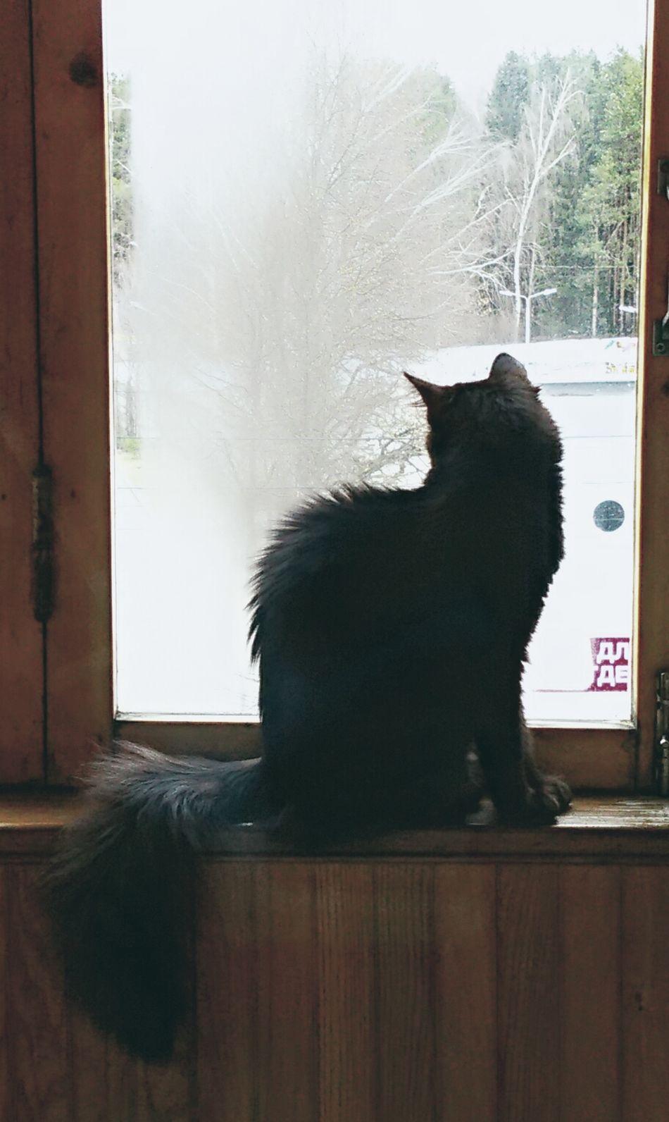 Cat I Love My Cats  One Cat 😻my Sweety Cat😻 😻😻😻❤️ Kitten 🐱 Cats 🐱 Cat Photography Beatiful Cat Black Cat Is Just So Beautiful. Cat♡ I Love My Cat Black Cat Animal One Animal I LOVE PHOTOGRAPHY Animal Themes