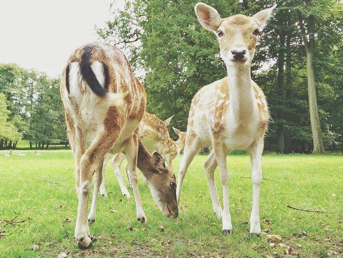 Sunday Realness with Bambi