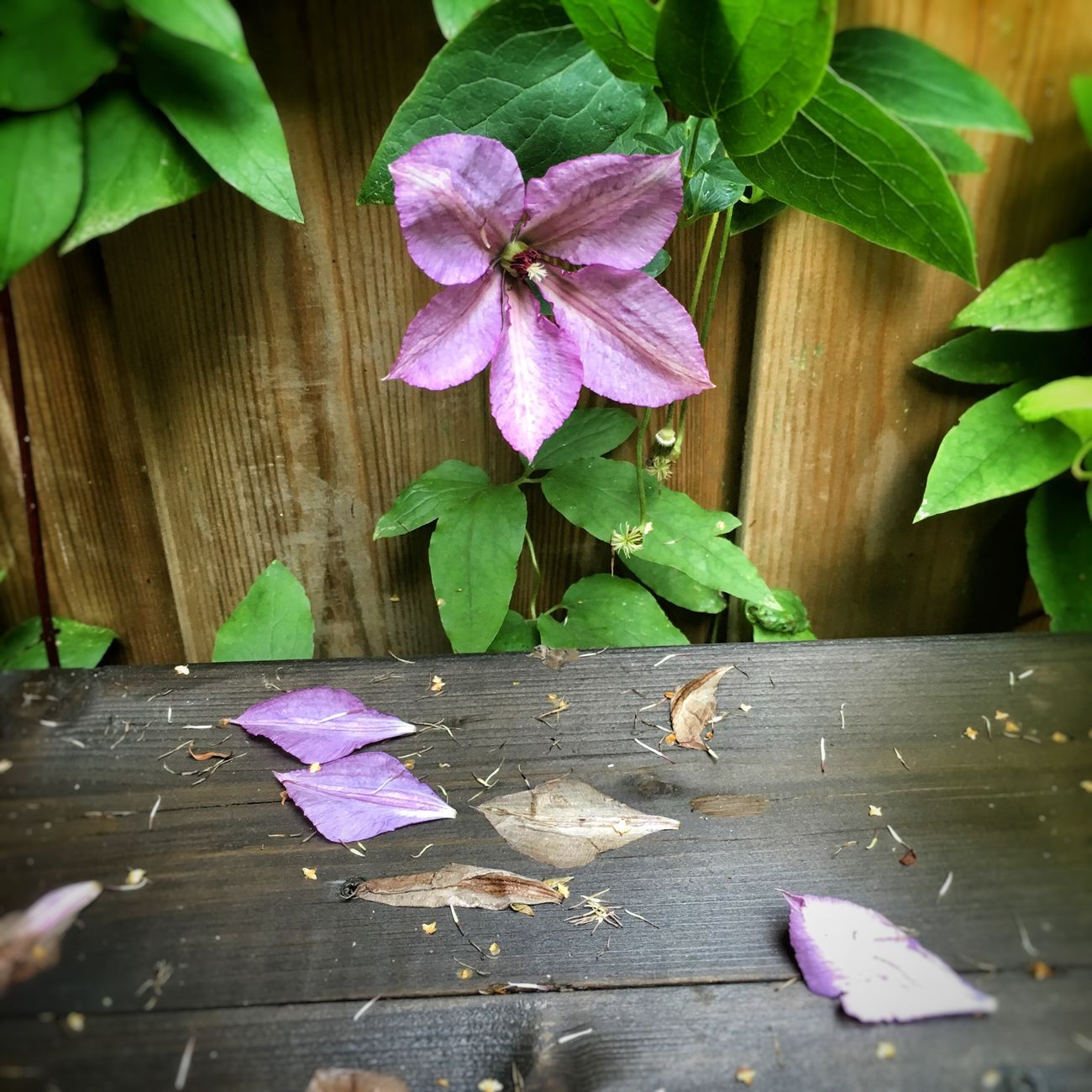 Flowers,Plants & Garden In My Garden Nature_collection Flowerporn Nature Photography