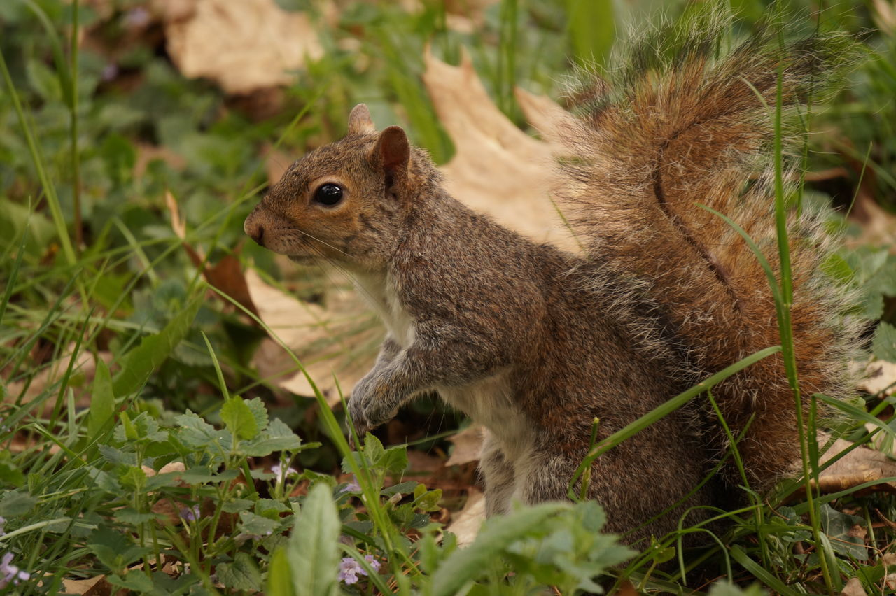 Nature Parco Castello Scoiattolo Natura Outdoors Animals In The Wild One Animal Squirrel