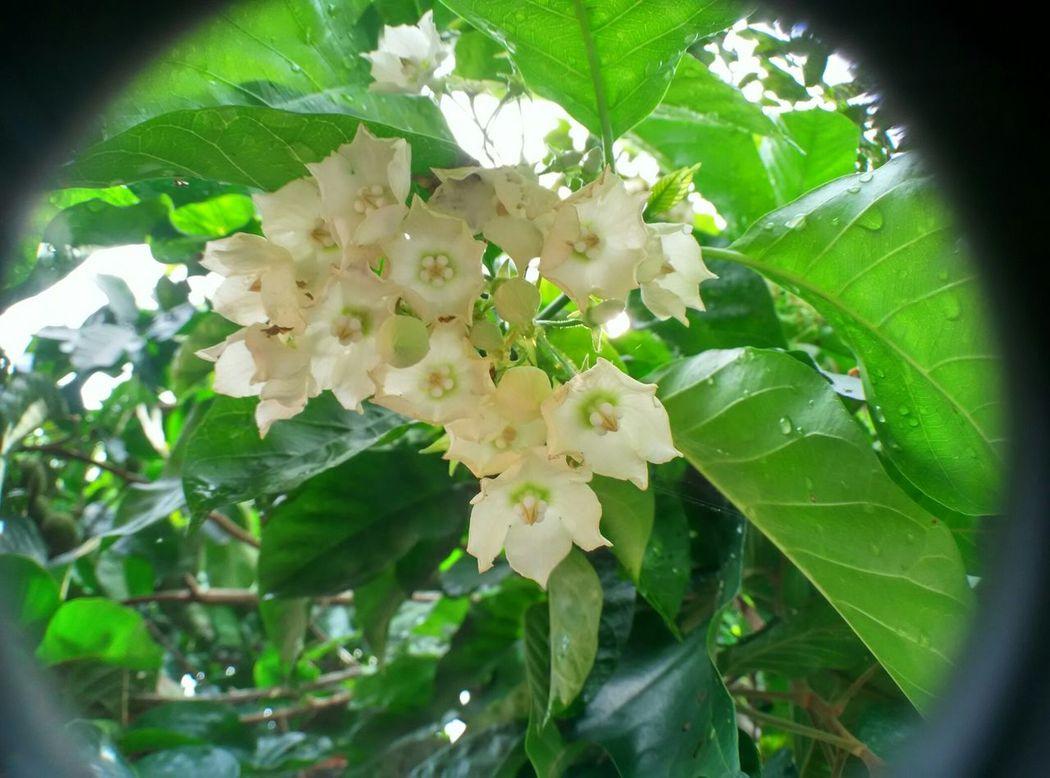 The pokok kerak nasi.. With the freshness air
