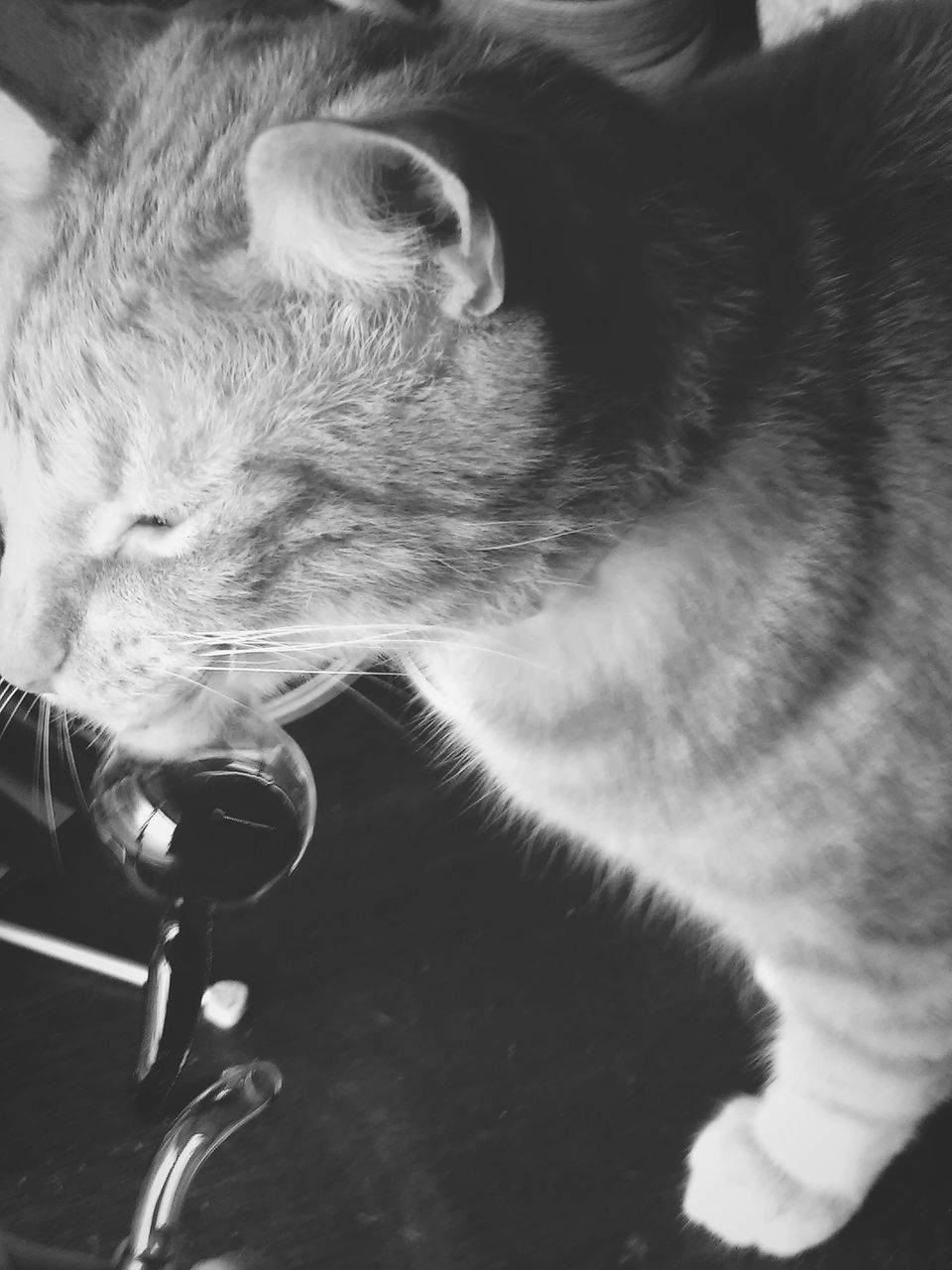 domestic cat, one animal, animal themes, pets, mammal, domestic animals, feline, indoors, no people, whisker, close-up, day